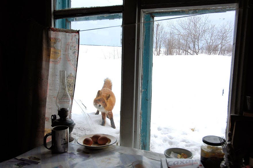 These 22 Photos Will Make You Fall In Love With Foxes (13)