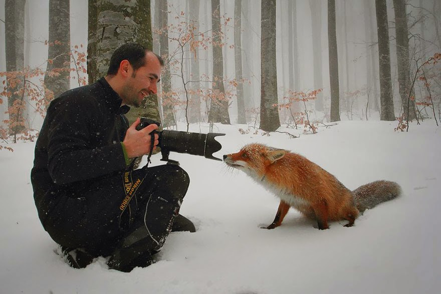 These 22 Photos Will Make You Fall In Love With Foxes (16)
